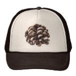 Gorra del cono del pino