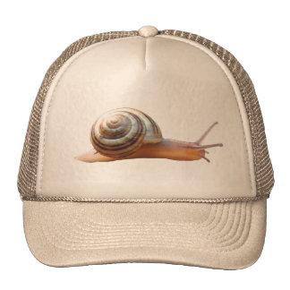 Gorra del ~ del caracol