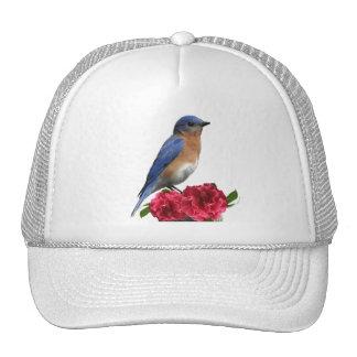 Gorra del este de la camelia del Bluebird