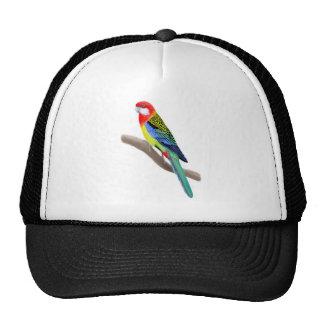 Gorra del este de Rosella