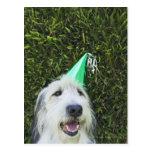 Gorra del fiesta del perro que lleva tarjeta postal