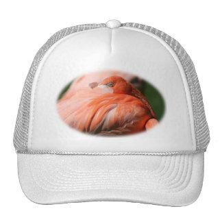Gorra del flamenco