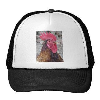 Gorra del gallo