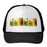 Gorra del girasol