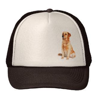 Gorra del golden retriever