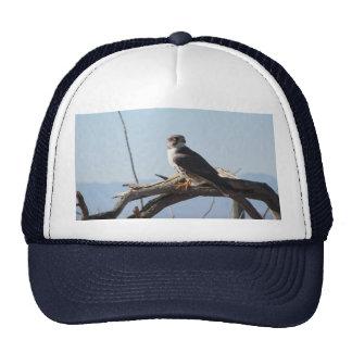 Gorra del halcón de la pradera