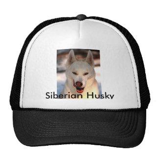Gorra del husky siberiano