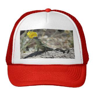 Gorra del lagarto