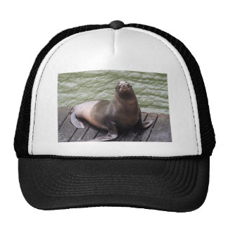 Gorra del león marino