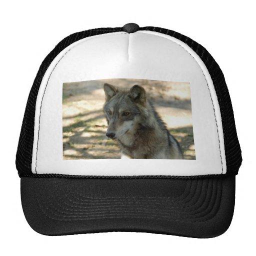 Gorra del lobo de los lobos