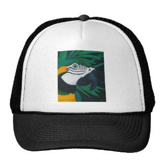 Gorra del Macaw