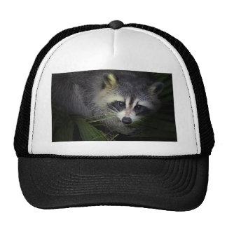 Gorra del mapache