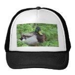 Gorra del pato del pato silvestre