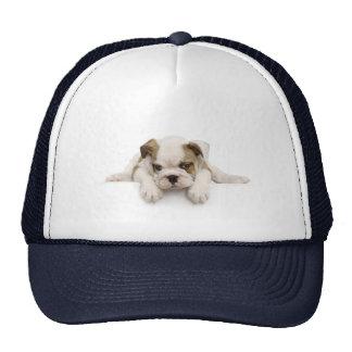 Gorra del perro de Bull del inglés
