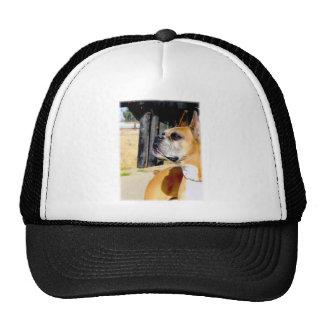 Gorra del perro del boxeador del cervatillo