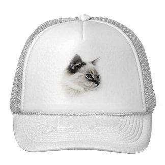 gorra del ragdoll
