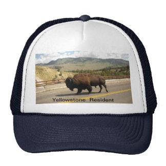 Gorra del residente de Yellowstone