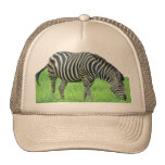 Gorra del safari de la cebra