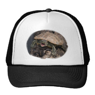 Gorra enojado de la tortuga