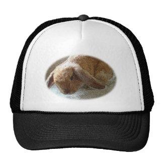 Gorra espigado del conejo de Holanda Lop