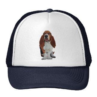 Gorra hermoso de la foto del perro de Basset Hound