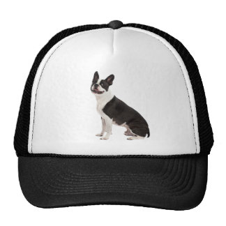Gorra hermoso de la foto del perro de Boston Terri