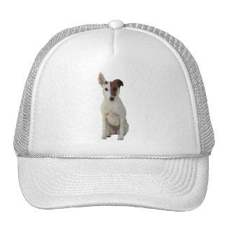 Gorra hermoso de la foto del perro liso del fox te