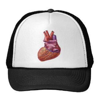 gorra humano del corazón