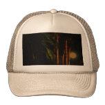 Gorra iluminado por la luna de las palmeras