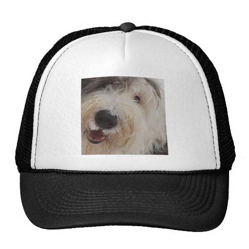 Gorra inglés viejo del perro pastor - cara de la n