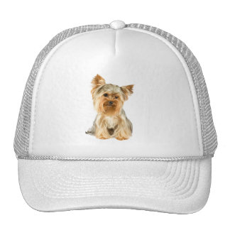 Gorra lindo de la foto del perro de Yorkshire Terr