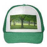 Gorra mágico del bosque de Shellis