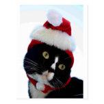 Gorra negro y blanco de Santa del gato que no mira Postal