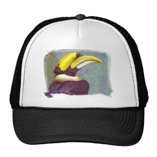 Gorra principal del Hornbill