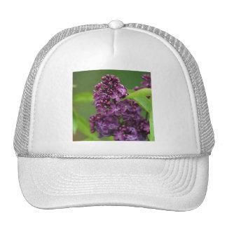 Gorra púrpura de la lila