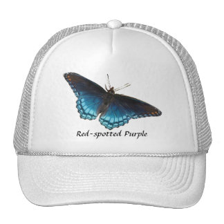 gorra púrpura Rojo-manchado de la mariposa