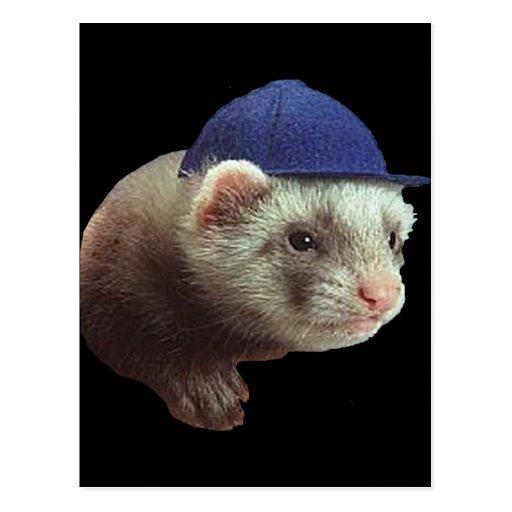 Gorra que lleva del hurón postales