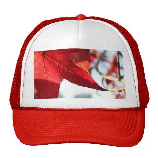 Gorra rojo de la hoja de arce