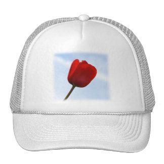 Gorra rojo del tulipán