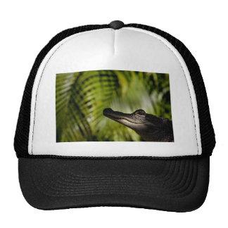 Gorra sombrío del cocodrilo