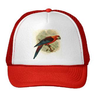 Gorra tricolor del camionero del Ara