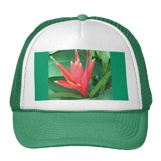 Gorra tropical de la ave del paraíso de la flor
