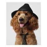 Gorra y lazo que llevan de oro del perro de canich poster