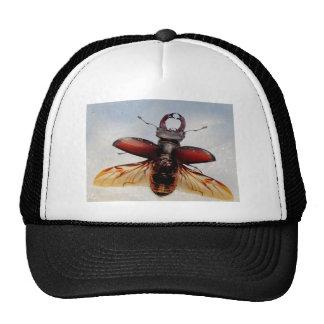 Gorras De Escarabajos