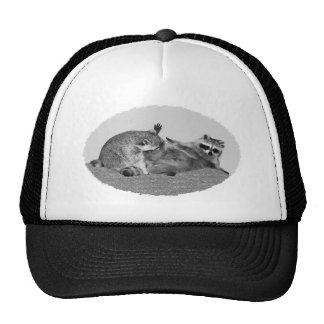 Gorras del mapache