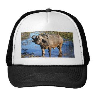 Gorras y casquillos del safari del búfalo del cabo