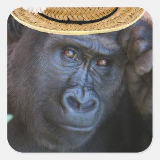 gorrilla in a straw hat square sticker