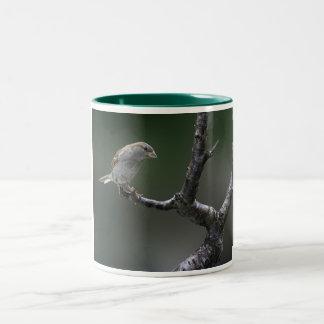 Gorrión 1 taza