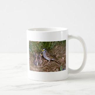 gorrión Blanco-throated con los polluelos Taza