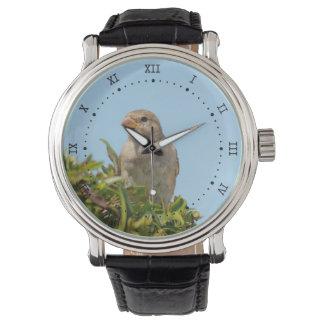gorrión contra el cielo azul relojes de pulsera